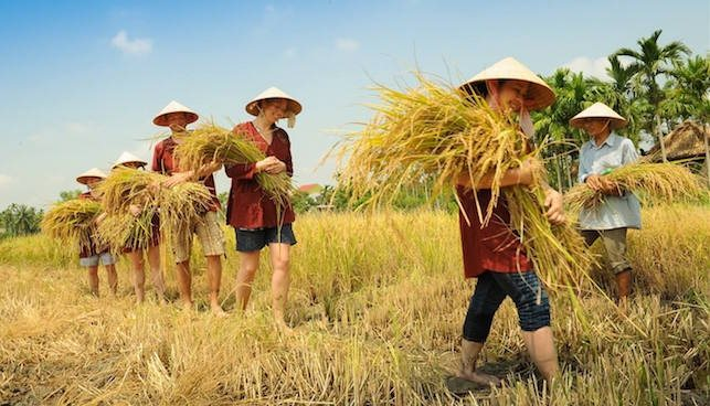 Agritourism promises new potential for Vietnam's tourism industry