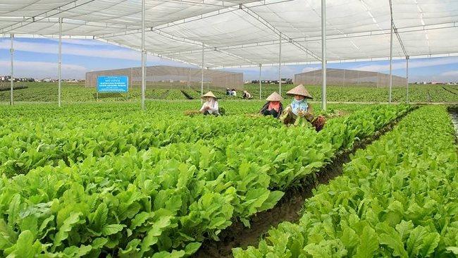 It is not easy to grow organic food in Vietnam