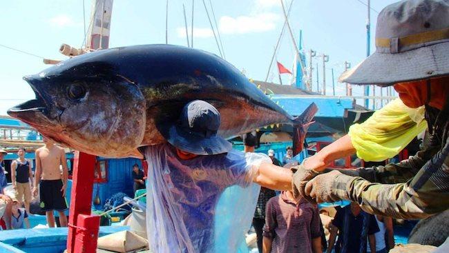 Vietnam fishing industry strives to remove EU yellow card warning