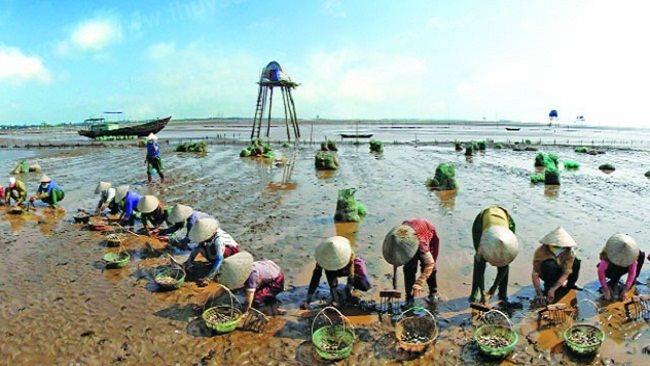 Thai Binh coastal economic zone to be established