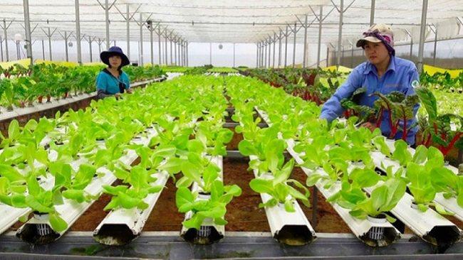 Mekong Agritech Challenge announces winners